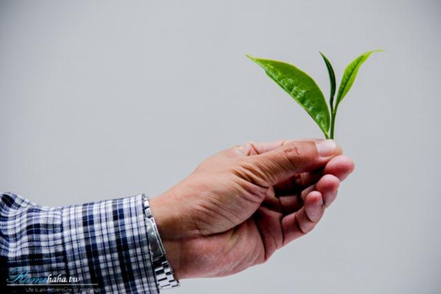 一心二葉有機栽種-南投日月潭-景點-亮點茶莊-東峰紅茶-評茶師體驗