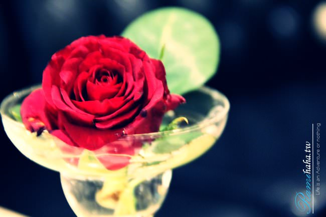 [365Plan] #033 台灣台北 古典玫瑰園 – 女人購買的,往往是對自己的美好想像,其實妳可以更喜歡妳自己。